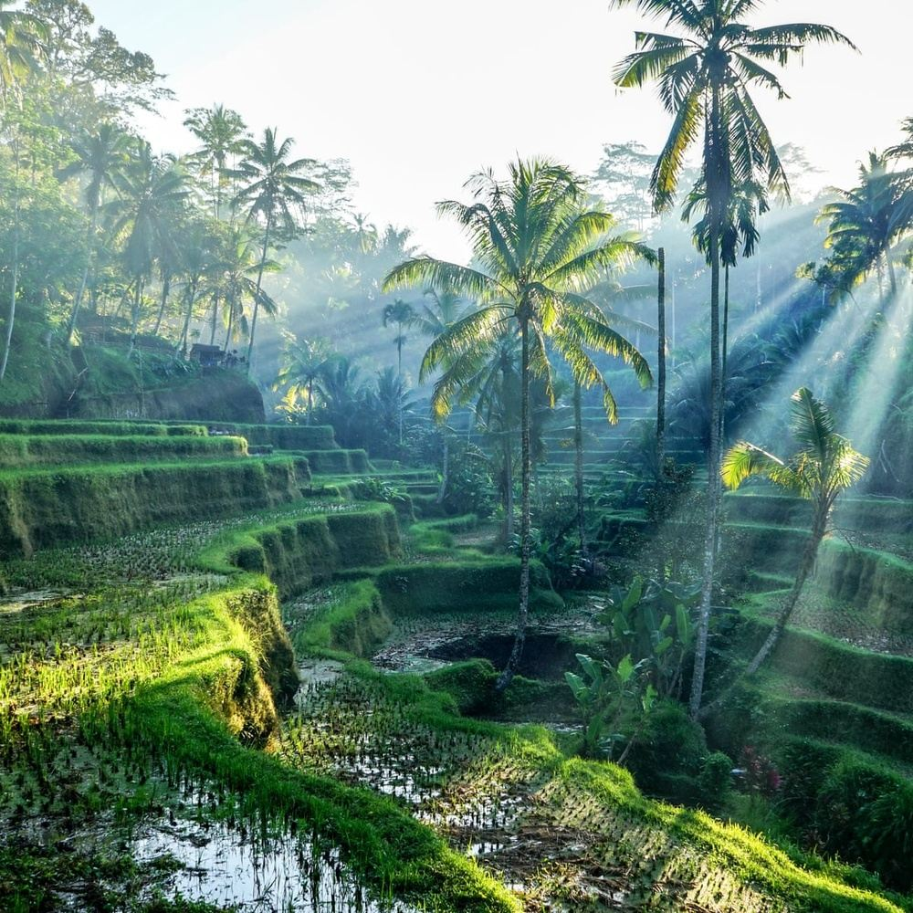 Full Day Bali Island Sightseeing Tour