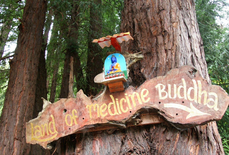 3 Days of  Gratitude: Yoga and Meditation Retreat Santa Cruz Mountains
