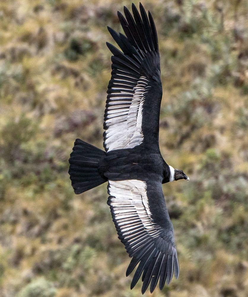 Chakana Reserve