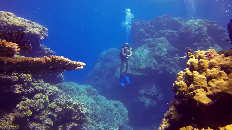 Egypt / Cairo & Sharm El Sheikh Trip for divers.