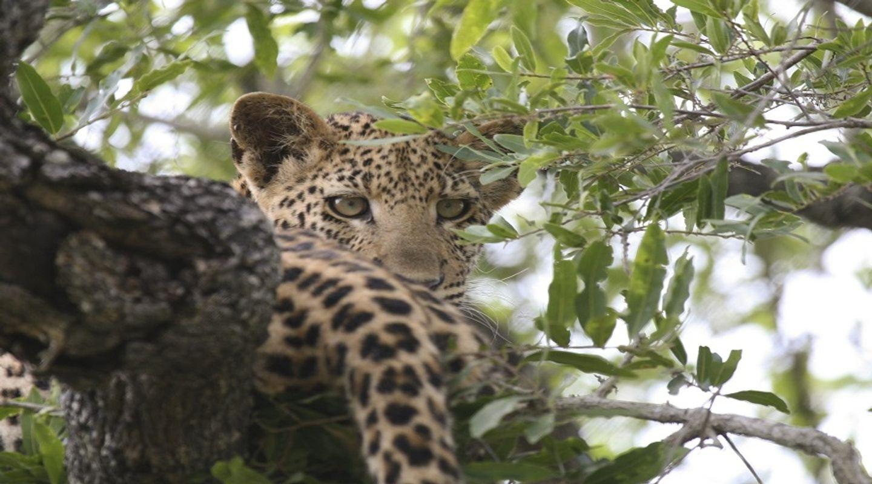 Ngorongoro & Lake Manyara Two Days Joining[Sharing] Safari