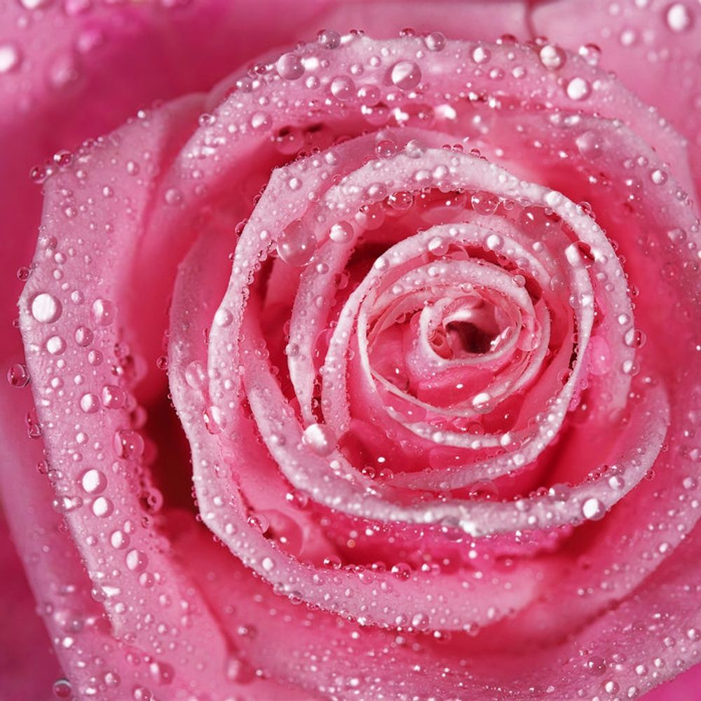 PINK ROSE ® RETREAT