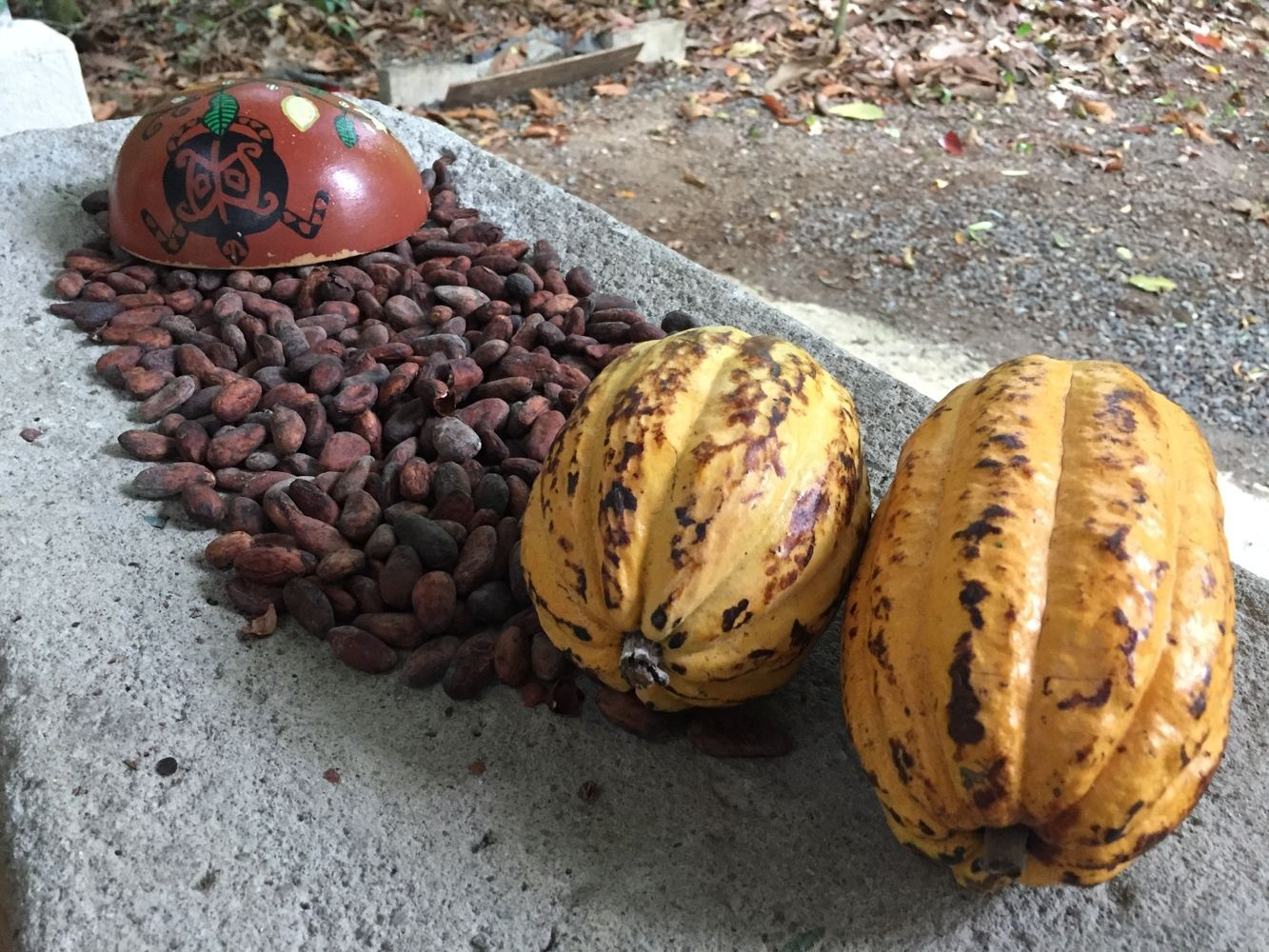 Bean to Chocolate Bar, Cacao Experience and Coffee Workshop