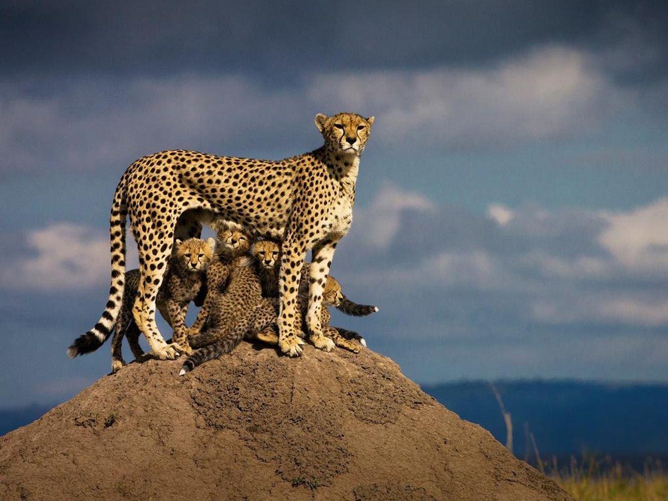 3 Days Masai Mara Budget Safari