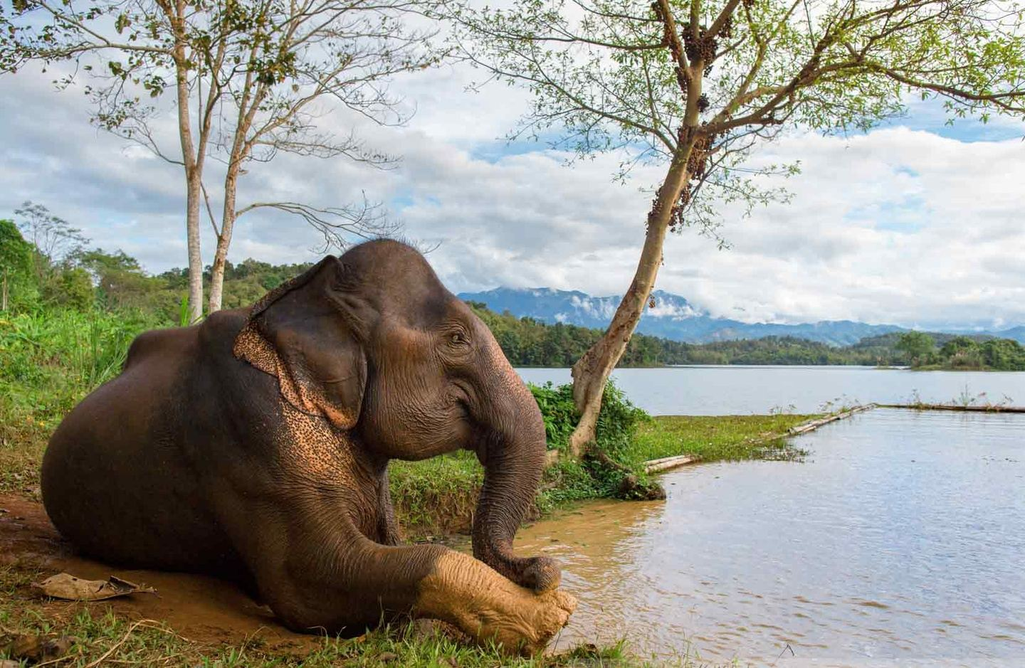 Elephant Conservation Exploration
