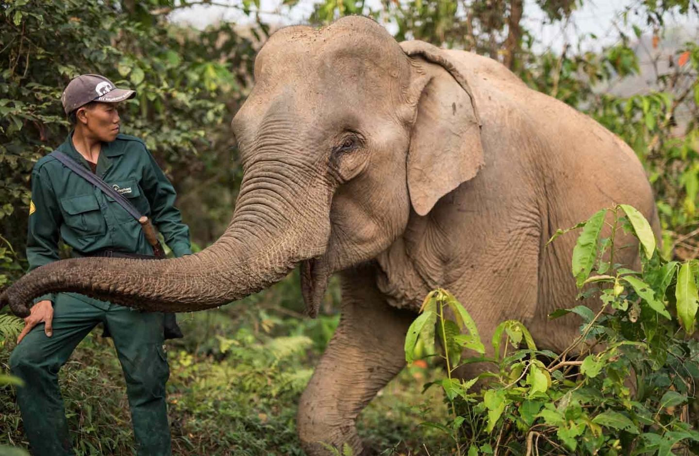 Elephant Conservation Volunteering