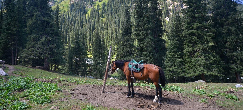 Horse riding in Shamsi gorge