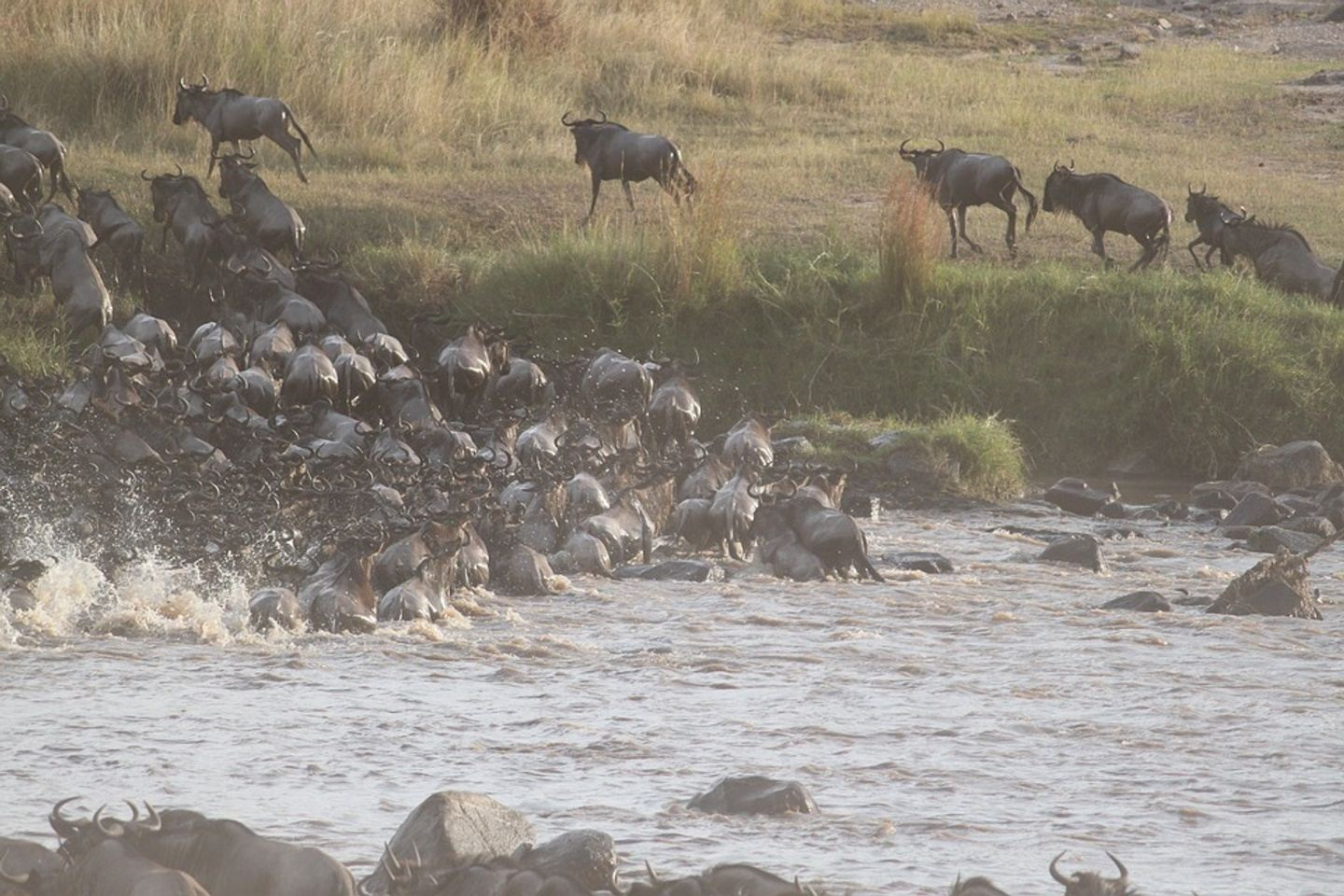 "Witness ""The Great Migration"""