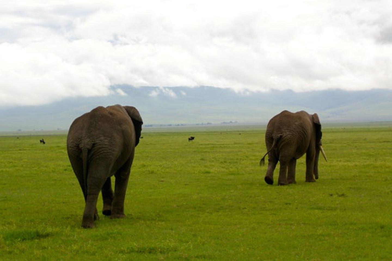 Arusha N.P, Tarangire & Ngorongoro