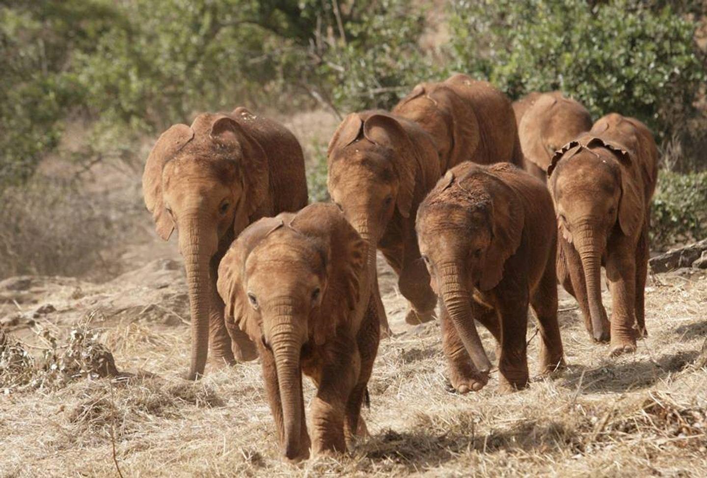 JANURY Big Elephant Magic- Kenya- Safari Magic!