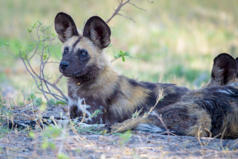 Epic 7 Day Kruger Park