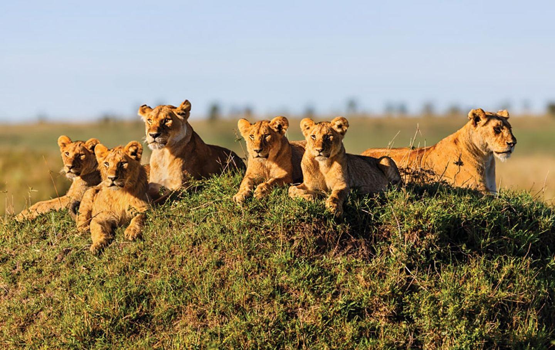 5-Days Masai Mara Migration Tour