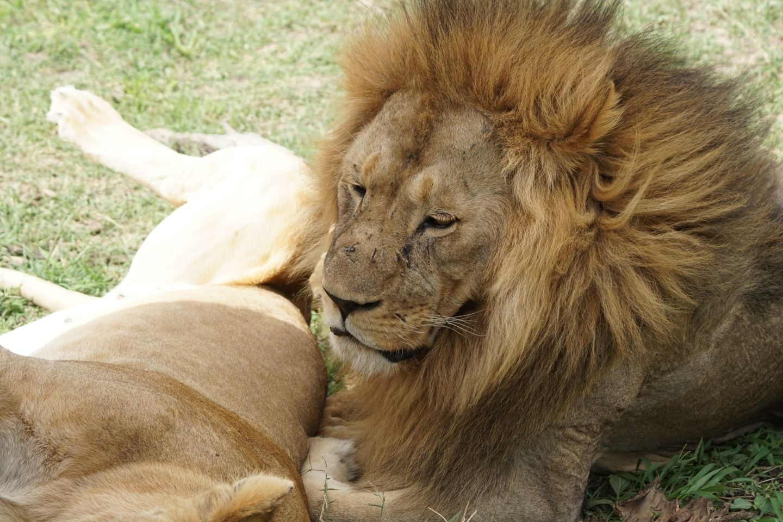 6 Days Camping Safari