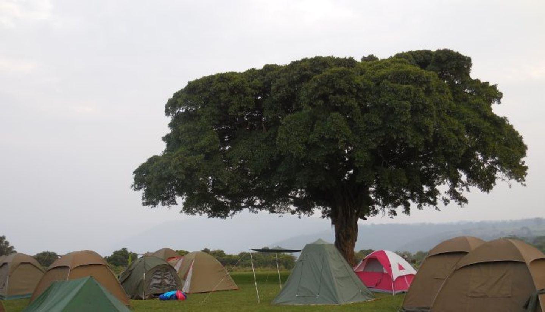 The Stargazer's Dream 5 Days Camping Safari