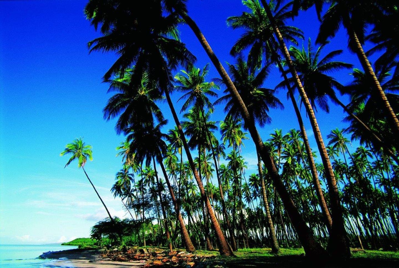 Hawaii: 4 Island Cruise & Tour
