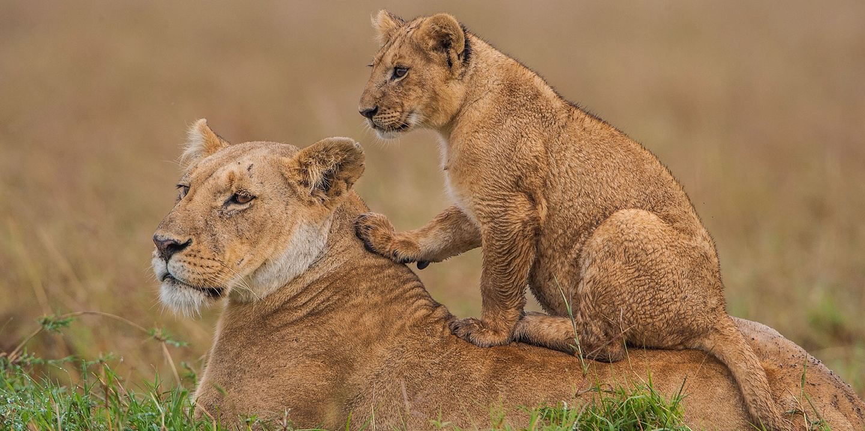 6 Days Amboseli Lake Nakuru Masai Mara Camping Safari