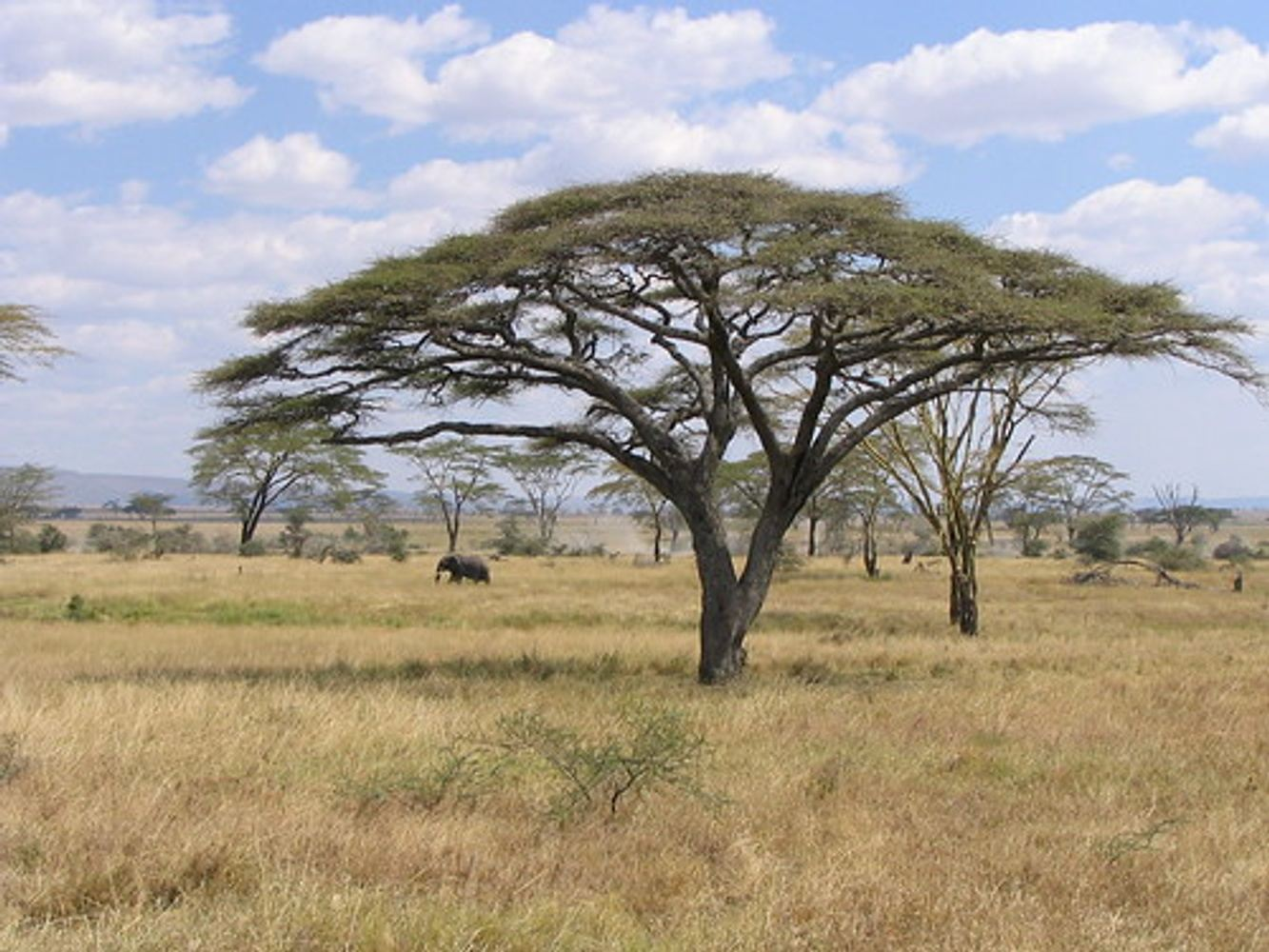 6 DAYS GREAT TANZANIA NORTHERN-SERENGETI MIGRATION