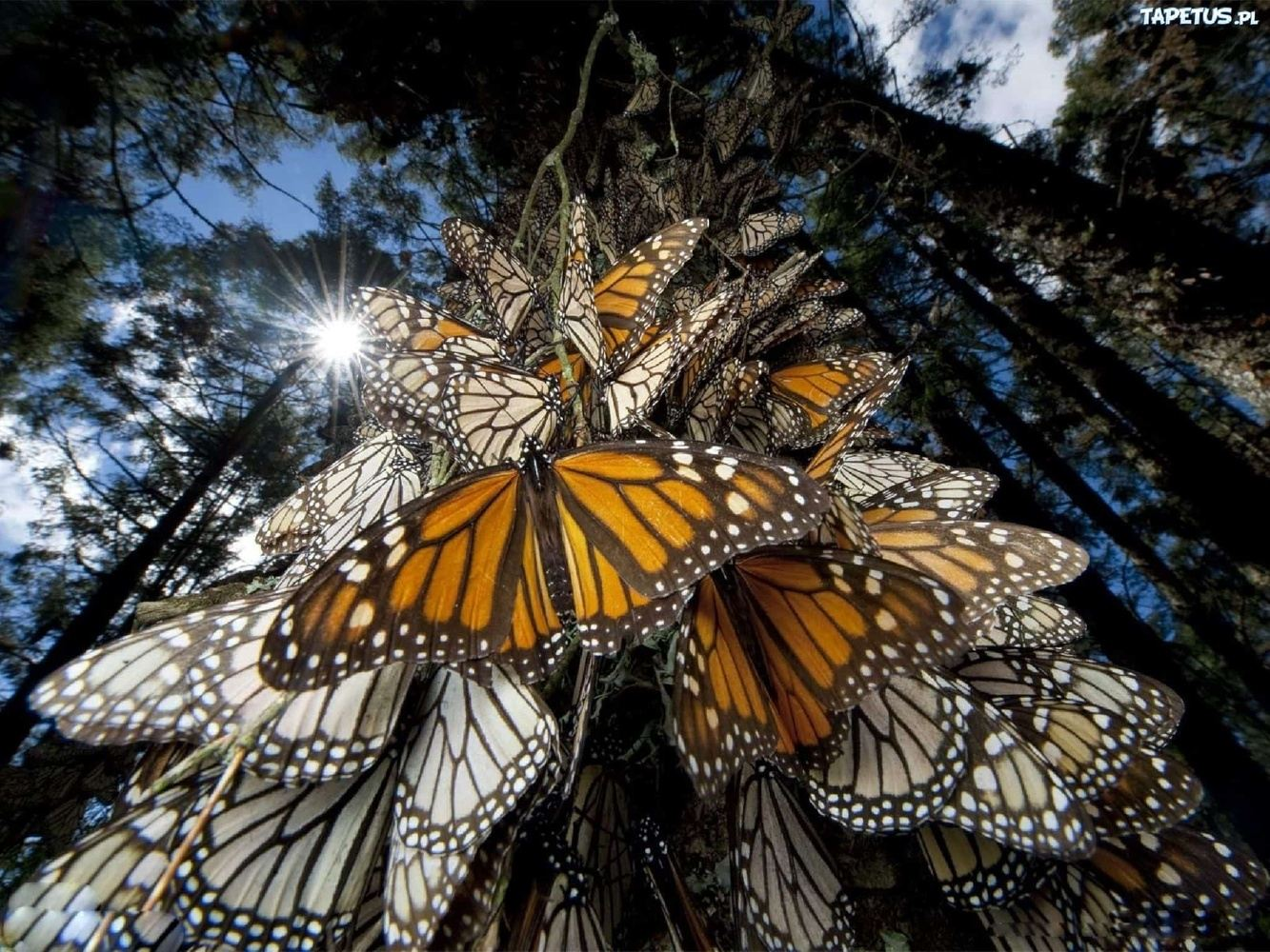 Extra night Monarch butterfly Tour Mexico, Marie Adams