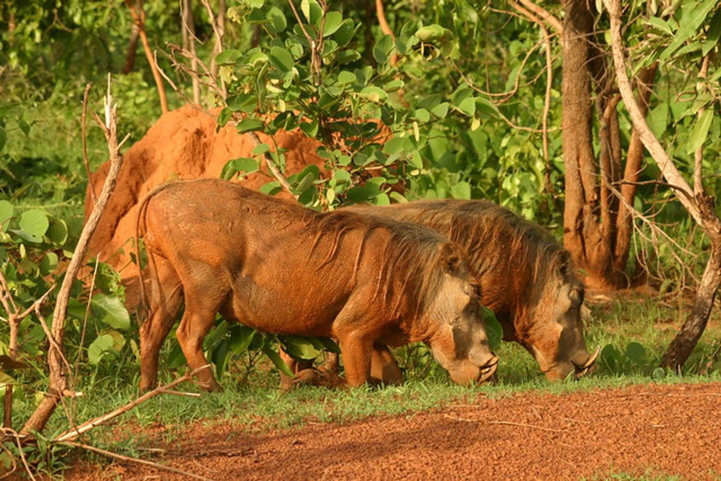 3 DAY TRIP TO MOLE NATIONAL PARK