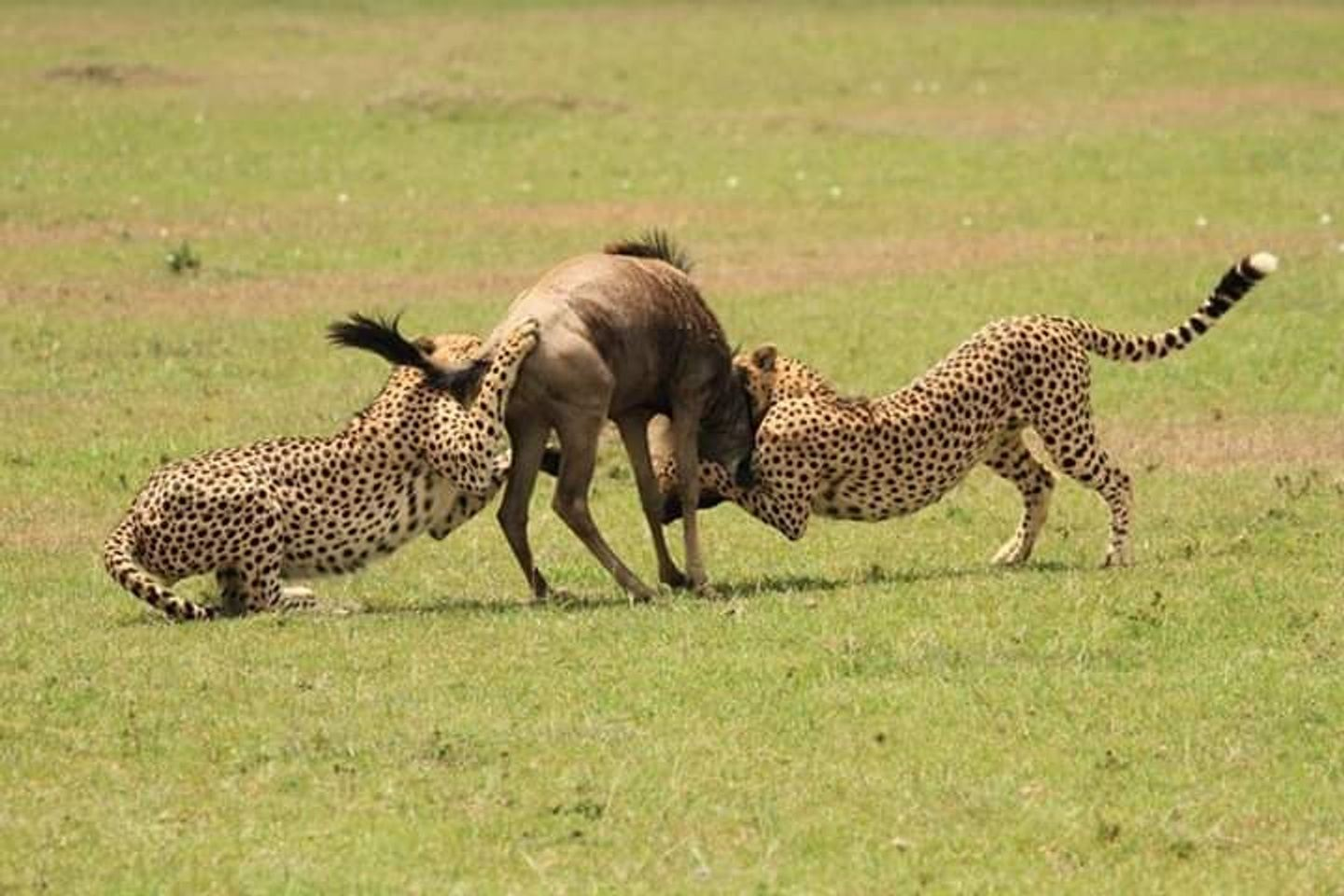 3 Days Masai Mara Group Budget Safari