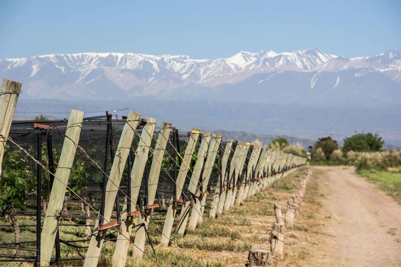 Private Wine Tour in Mendoza, Argentina