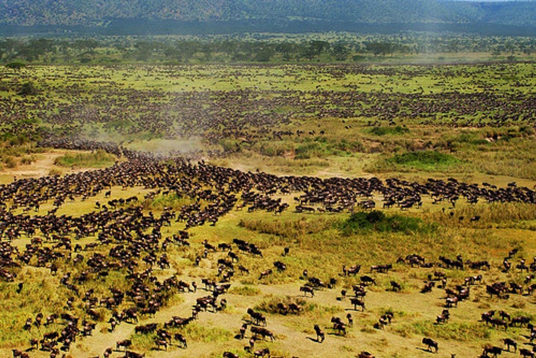 5DAYS GREAT TANZANIA EASTERN SERENGETI MIGRATION
