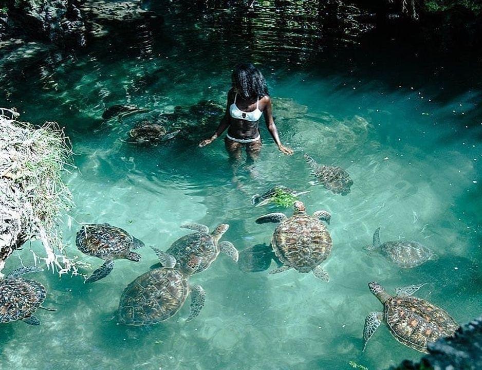 Nungwi Mnarani Aquarium ile ilgili görsel sonucu
