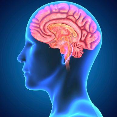 Your Brain on Yoga - Nervous System & Yoga