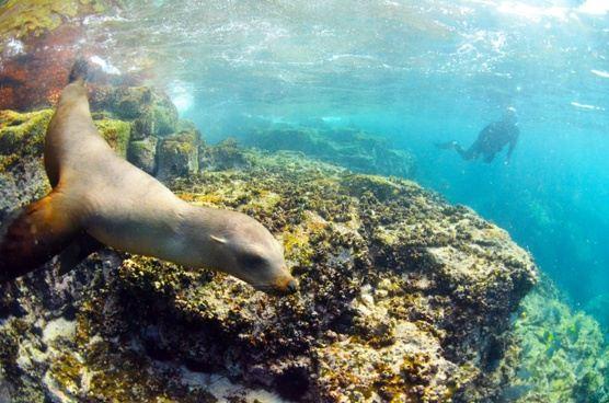 Sea of Cortez Snorkeling Safari + Gray Whales