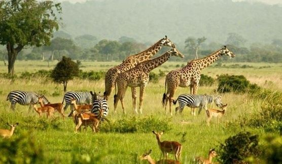 South Africa Experience - 11D/10N