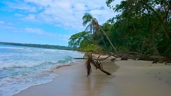 Handstand & Yoga in Costa Rica