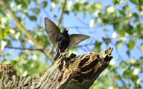 A Songbird Retreat: The Unleashed Voice