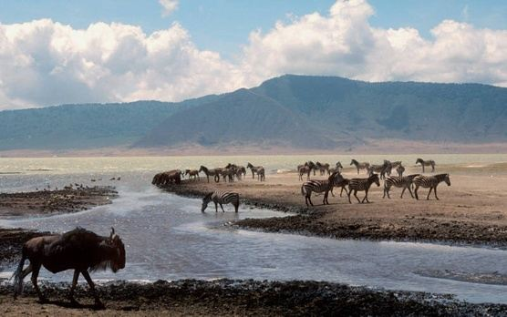 Tanz + Zanz - Wildlife Safari & Epic Beach Getaway