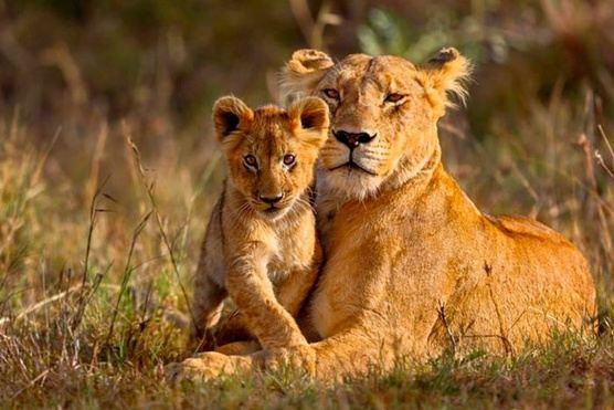 Zimbabwe : Wild At Heart