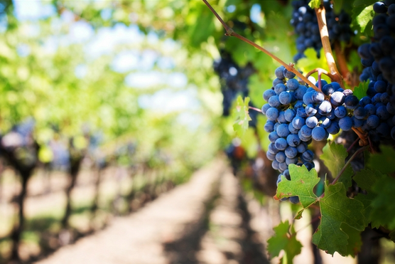 Unwind Amongst the Vines 2019