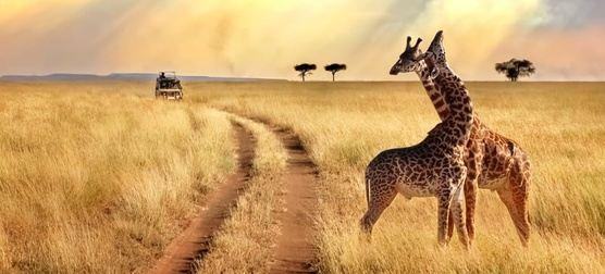 South African Splendor - 7D/6N