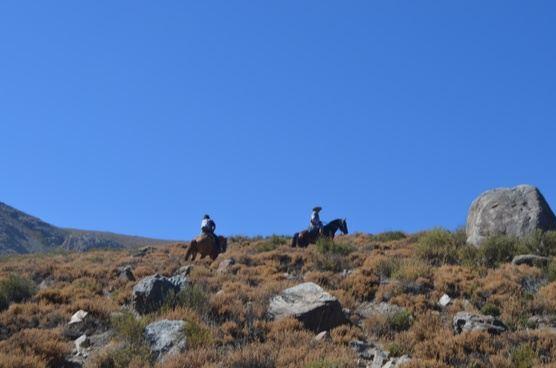 PRIVATE Yerba Loca horseback riding