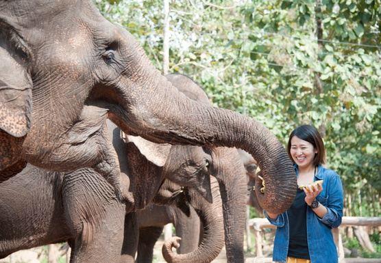 空室を問い合わせた後ご支払いください。象使いラオス・ルアンパバーンツアー (D01, D02共用)
