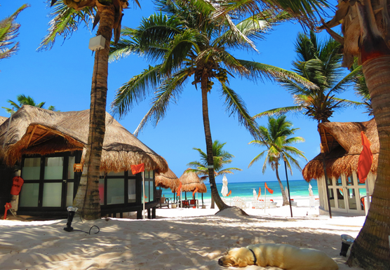 Tulum Yoga and Chill Retreat