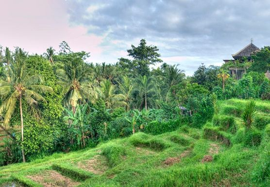 Bali Self-Realization & Empowerment Retreat (June 2019)