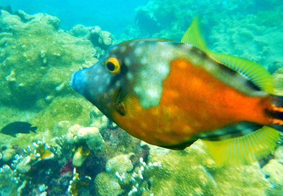 Trinidad & Tobago 2020 : Rainforest -Reef + Leatherback Sea turtles