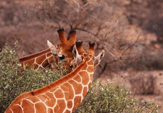 Serenity - Yoga & Safari Retreat  in Tansania