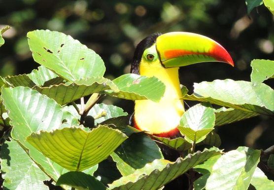 Transformation, Creativity, Life!  - COSTA RICA RETREAT -