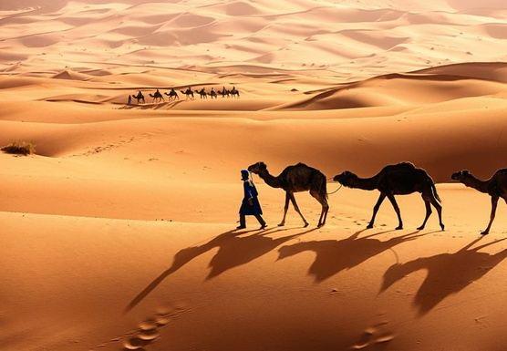 Priscilla E - Morocco Trip - March 2020 - RT