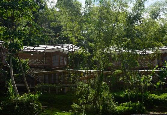 Amazon rainforest - experimental style 4 days