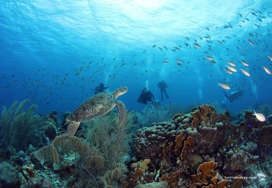 The Dive Bus - 3 Day Guided Dive & Drive Packages