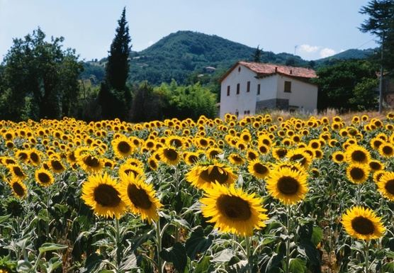 Yoga Retreat in Piobbico, Italy!