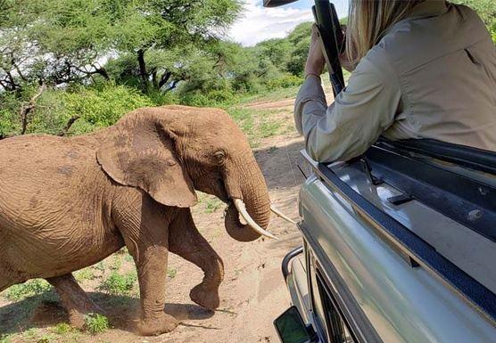 Africa 2021: Best of Tanzania's Northern Circuit + Serengeti Safari