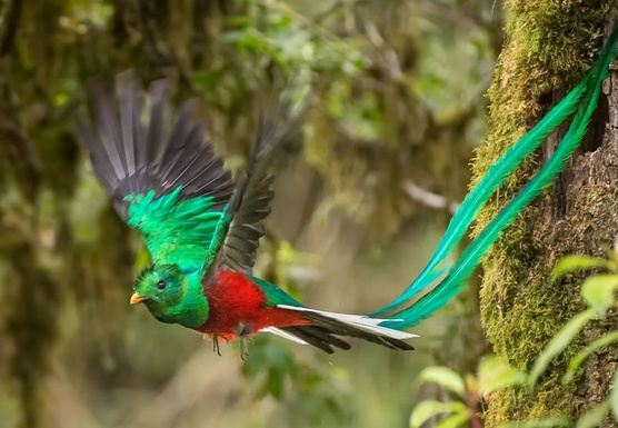 Cultural & Natural Costa Rica Small Group Tour - Dec 2019