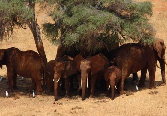 Great Tour of Kenya